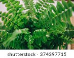 Nephrolepis. Fresh Air In The...