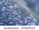 lobelia flower at  pra tum nak... | Shutterstock . vector #374529115