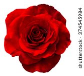 Stock photo red rose isolated on the white background 374545984