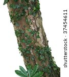 Detail Of Tree Trunk With Ivy...