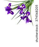 Bouquet Of Violet Iris  Bulbou...