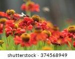 red flower meadow. spring...   Shutterstock . vector #374568949