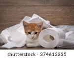 Stock photo cat and toilet paper little kitten playing with the toilet paper how to accustom the cat to the 374613235