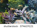 the flora and fauna of the... | Shutterstock . vector #374619121