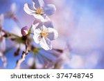 spring cherry blossom close up. ... | Shutterstock . vector #374748745
