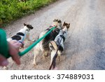 Stock photo unrecognizable man walking three dogs on a dry dusty road 374889031