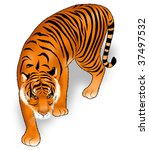 tiger illustration | Shutterstock . vector #37497532