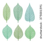 vector leaves isolated and... | Shutterstock .eps vector #375001591