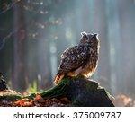 Stock photo eurasian eagle owl bubo bubo sitting on the stump close up wildlife photo 375009787