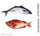 Watercolor Food Clipart   Fish