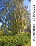 beautiful park in sarasota ... | Shutterstock . vector #375041221