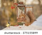 Red Squirrel And Titmouse Wit...