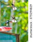 hummingbirds  panama  central... | Shutterstock . vector #375294829