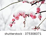 Winter Flower  Pink Plum Flowe...
