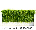 Wall Green Leaves Isolated On...