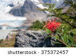 red flower blooming in front of ... | Shutterstock . vector #375372457