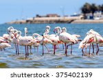 close view of the flamingos in... | Shutterstock . vector #375402139
