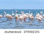 close view of the flamingos in... | Shutterstock . vector #375402151
