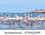 close view of the flamingos in... | Shutterstock . vector #375402499