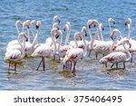flamingos at the walvish bay in ... | Shutterstock . vector #375406495