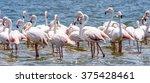 flamingos at the walvish bay in ... | Shutterstock . vector #375428461