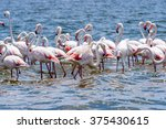flamingos at the walvish bay in ... | Shutterstock . vector #375430615