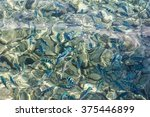 The Crystal Clear Water Of The...