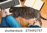 Stock photo friendly workspace man working on the floor with his grey cat 375492757