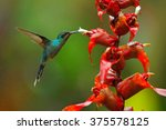 green hermit  phaethornis guy ... | Shutterstock . vector #375578125