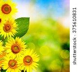 Beautiful Sunflower Field In...