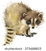 Raccoon. Raccoon Forest Animal...