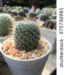 Small photo of Cactus scientific name Plantae Magnoliophyta Magnoliopsida Caryophyllales Cactaceae
