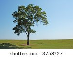 Small photo of tree in park