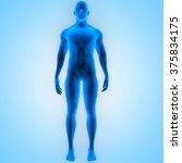 human male muscle body | Shutterstock . vector #375834175