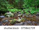 Pure Mountain Creek In Deep...