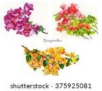 Bougainvillea Flowers Poster. ...