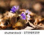Close Detail Of Small Violet...