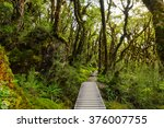 Native Beech Forest Of New...