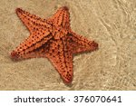 Starfish On Jamaica Beach