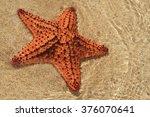 Starfish On Jamaica Beach