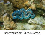 underwater marine life  bivalve ... | Shutterstock . vector #376166965