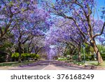 Street In Pretoria Lined With...