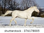 White Horse Runs In The Snow...
