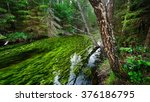 forest spring at the beginning... | Shutterstock . vector #376186795