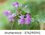 violet ixora flower | Shutterstock . vector #376290541