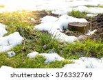 Spring  Grass  Melting Snow