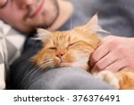 Stock photo sleeping young man with fluffy red cat 376376491