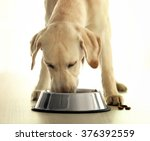 labrador dog eating food from... | Shutterstock . vector #376392559