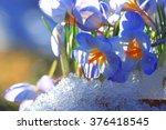 Snow Snowdrops Spring Flowers...