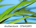 grass with raindrops - stock photo